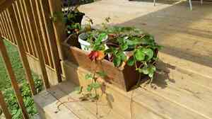Rustic Planter for your Winter Greenery Peterborough Peterborough Area image 5