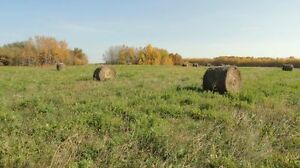 FARM LAND - HAY LAND- 114.ACRES IN TWEEDSMERE/ EMMA LAKE AREA