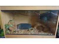 """Reptile vivarium with accessories 36x15"""""""