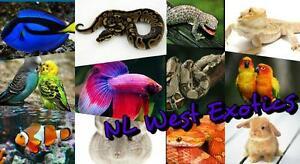Reptile Feeder Orders
