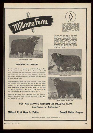 1949 shorthorn cattle cow bull photo Milloma Farm Powell Butte Oregon print ad