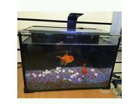 27 litre LED light fishtank