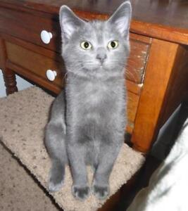 """Baby Male Cat - Domestic Short Hair: """"Nautical 1, 2, and 3"""""""