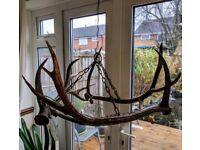 Antler chandelier Great condition