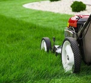 Grass cutting as low as $30. Mississauga
