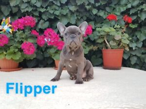 French | Adopt Dogs & Puppies Locally in British Columbia