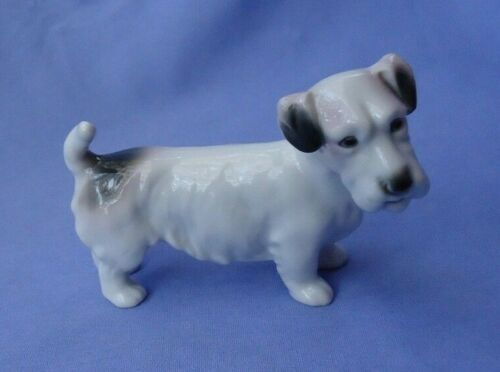 1930 SEALYHAM CESKY TERRIER GERMANY AVP dog