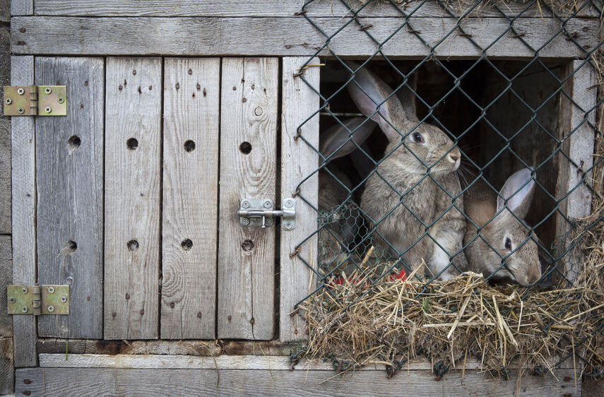Your Guide to Rabbit Hutches