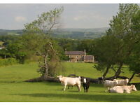 Pet Friendly Northumbrian Holiday Cottage