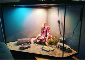Two Bearded Dragons/ Tanks and set up