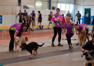 Flyball Classes starting soon!