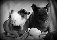 Two Gorgeous Naked Ladies Looking for a New Home (Skinny Pigs)