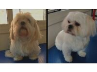 Professional Dog Grooming Service in Wolverhampton - 10% OFF FOR NEW CLIENTS