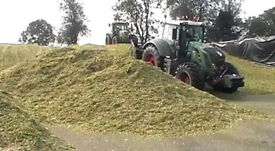 Top quality maize silage for sale