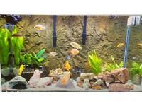 Local Aquarium water changer!