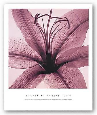 PHOTO FLORAL ART PRINT Lily by Steven Meyers