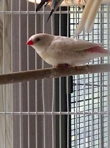 many finches for sale