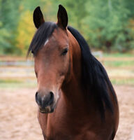 NEED FARM HELP? HORSE TRAINER/EXERCISER/STABLE HAND