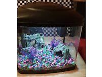 50L fish tank.