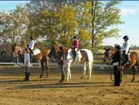 Horse & Pony Rides in Barrhaven this Sunday