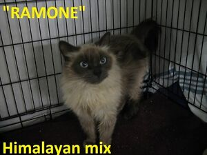 HANNA S.P.C.A. - 17 ADOPTABLE KITTENS & CATS!!!