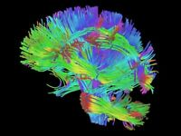 Join a database of neuroscience volunteers and help brain research!
