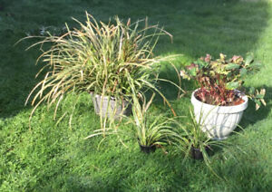 Easy care Perennials