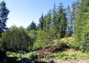 Gold River B.C. Large House Lot for Sale $69,900