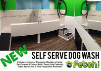 Self Serve DOG WASH at Fetch Haus!