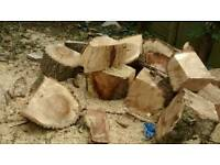 Tree Logs For Sale