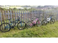 Adult & teenage boy's and girl's mountain bikes for sale. In great condition as hardly ever used.