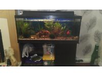 3ft 1ft by 16inch fish tank