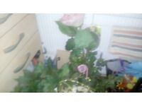 Floristry or craft accessories