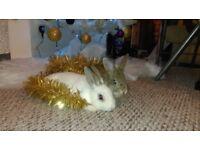 2 lovely rabbits