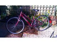 Apollo Bike, 28 Inch Wheels, 18 Speed, Adjustable Seat, Bell £50 ONO