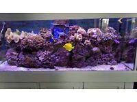 5 ft marine aquarium full setup with fish, corals and live rocks
