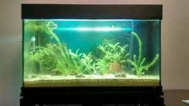 Fish Tank wich Stand