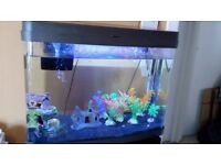 40 litre fish tank and accessories