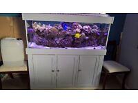 5ft marine aquarium full set up with fish, live rock and corals