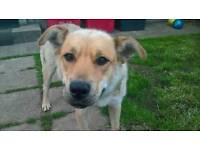 Missing dog - name Pepa