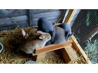 7 rabbits for sale.