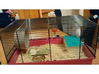 Hamster and set up