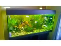 Lovely fish tank with fish