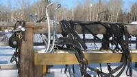 Double Horse Harness for sale