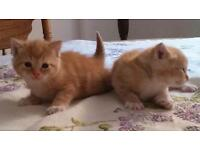 2 Adorable kittens FREE to a good home