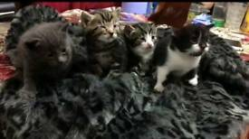 Cat and 4 kittens (2 months old)