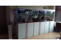 Large Aquarium/Piranhas