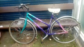 I sell bicycle for woman. Nice and comfortable. Small price for an APOLLO bicycle.