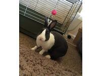 Free rabbit