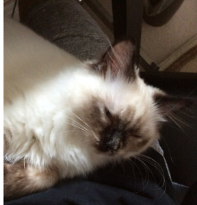 Cute female cat ready for rehome